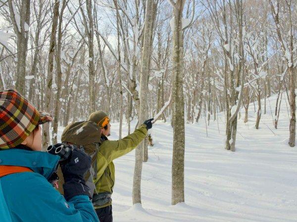 十和田湖・蔦の森 歩くスキー