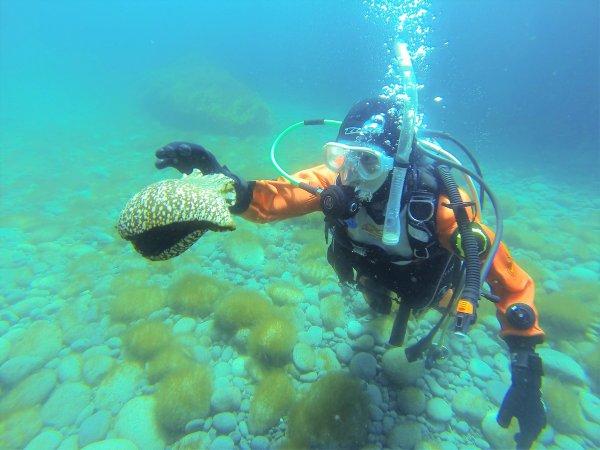 アメフラシやウニなど、海で暮らす生き物たちに出会えます。