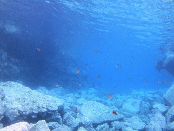 水深2~3mの海底から眺める水中世界はとっても幻想的♪