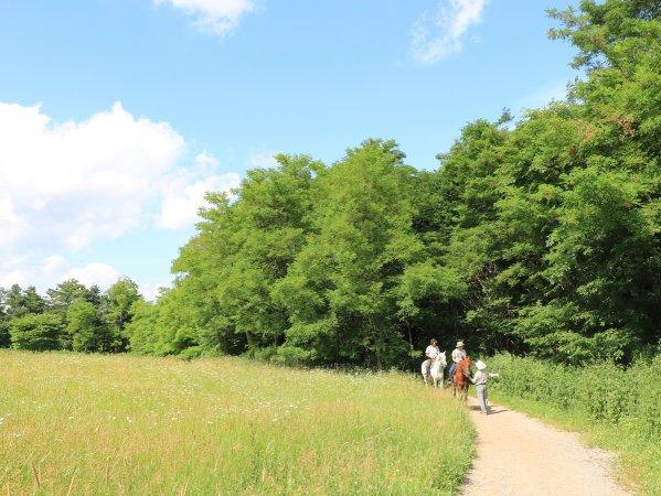 開放的な景色を楽しみながら、牧草地を散策!