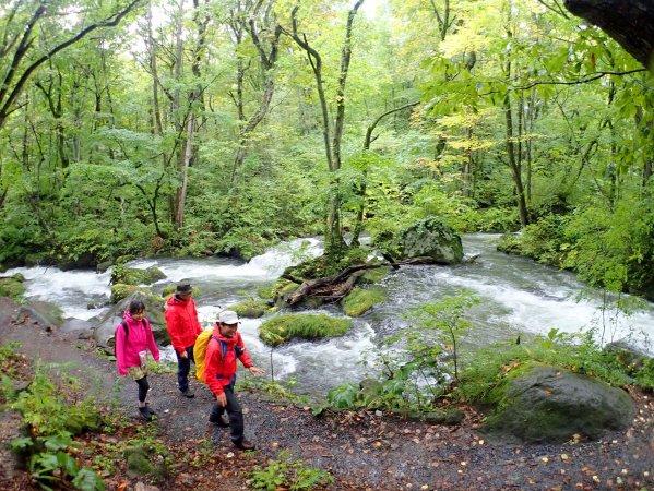 緑いっぱいの奥入瀬渓流!流れも美しい!