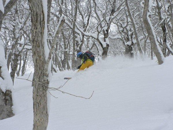 木々を縫うように滑るツリーラン