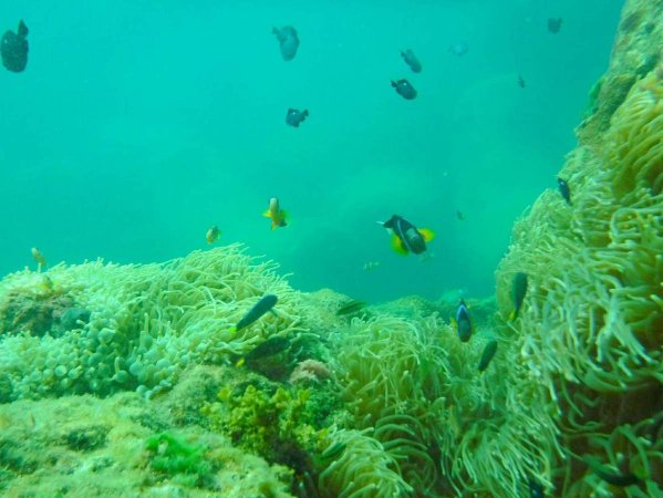 透明度抜群の海!色鮮やかなお魚がいっぱい!