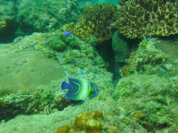 シュノーケリングでは、色鮮やかな魚たちに出会えます!
