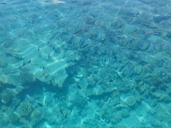 透明度抜群の海はかわいい魚たちも水面から見える!