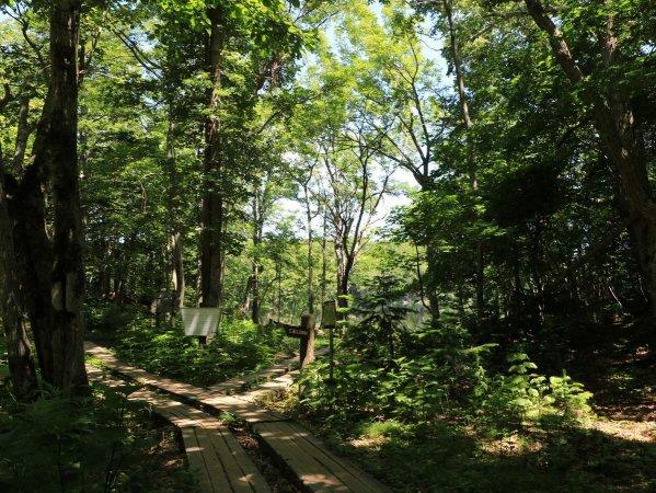 手つかずの森をガイドが案内します。