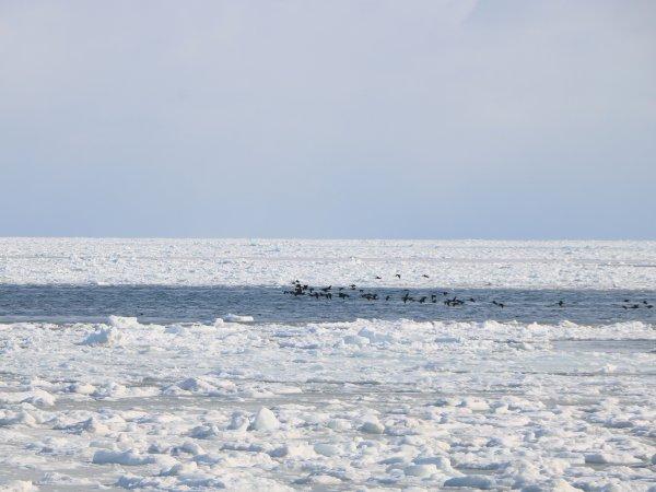 押し寄せる流氷が見られることも(※2月後半~3月上旬のみ)
