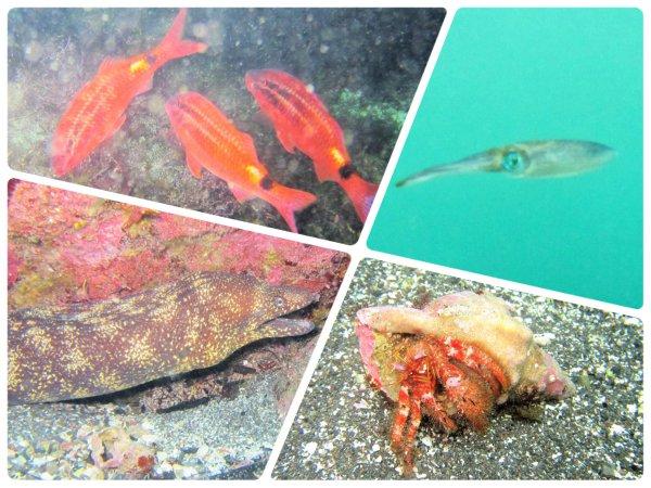 海の中には生き物がいっぱい