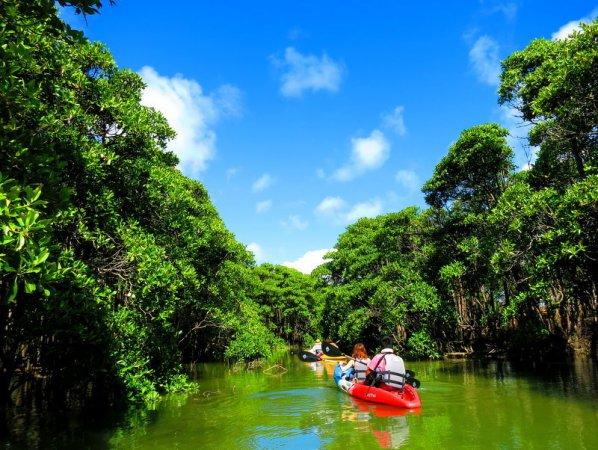 穏やかな億首川はマングローブの種類も豊富