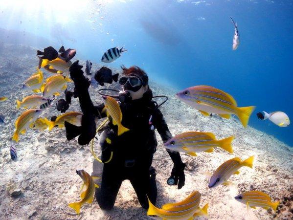 白砂が広がる明るい場所でダイビング。サンゴやカラフルなお魚をのんびり観察できるコースあり