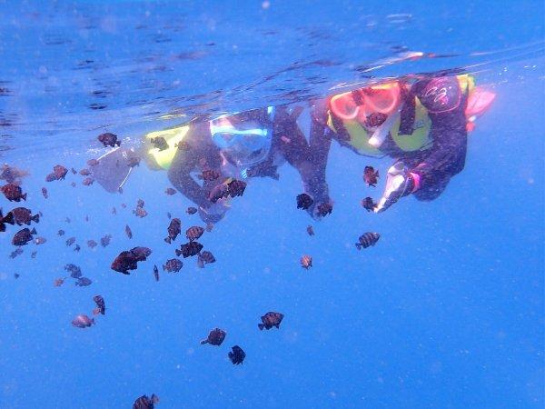 お魚いっぱいのシュノーケリングスポット