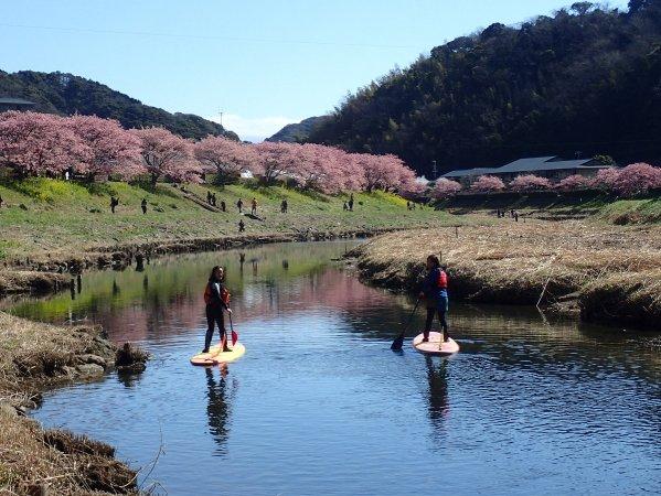 両岸4キロにわたって続く桜並木