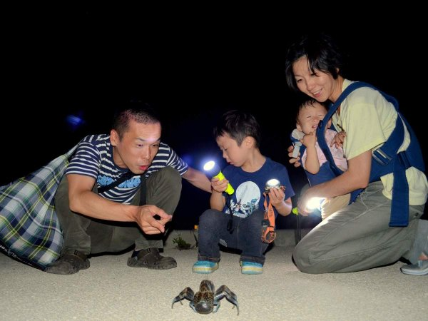 石垣島 自然観察・動物観察