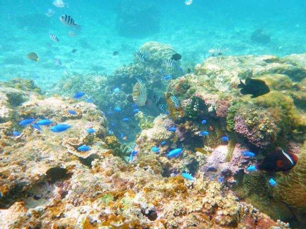 鮮やかな熱帯魚に、様々なサンゴ。水族館の中の世界が目の前に!