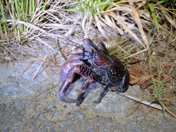 絶滅危惧種をはじめとした、不思議な生き物を観察する「ナイトサファリ」