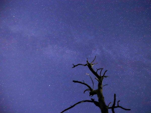 空いっぱいにきらめく星たちも、石垣島の魅力です。