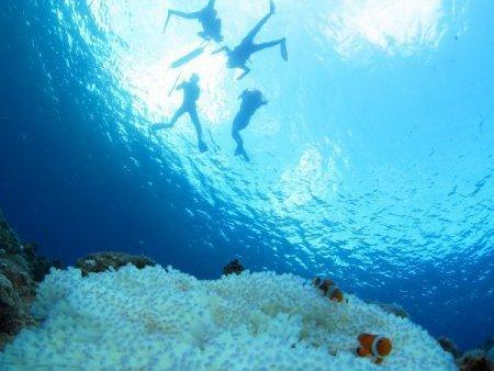 広大なサンゴやカラフルな魚たちを見にいこう!