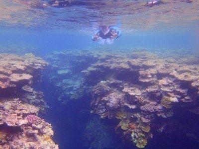 カラフルなサンゴやお魚がたくさん