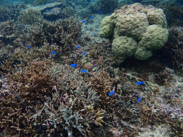 透明度の高い海の中には色鮮やかな魚や珊瑚が!