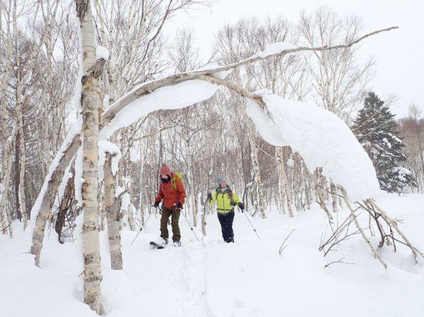 歩くスキー(スノーランブラー)で行く自然観察ツアー