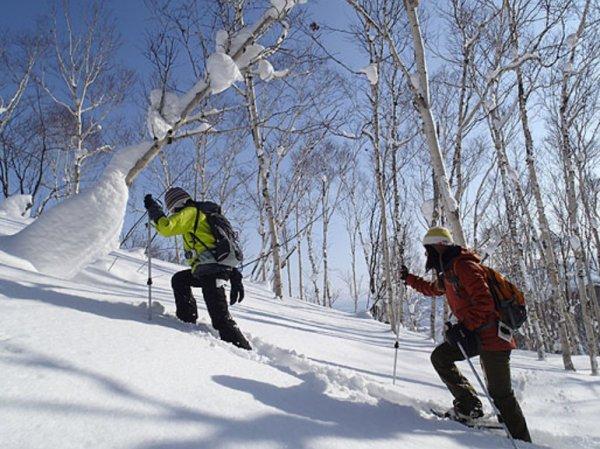 スノーシューで行く自然観察ツアー