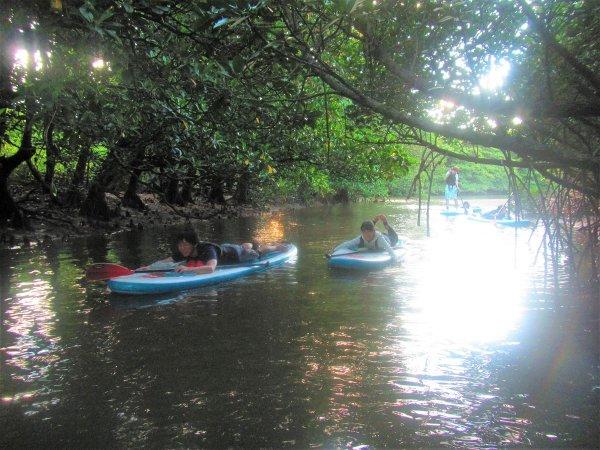 マングローブの緑のトンネル
