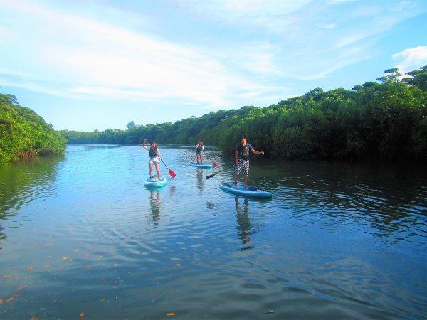 マングローブ・ジャングルの中を水上散歩