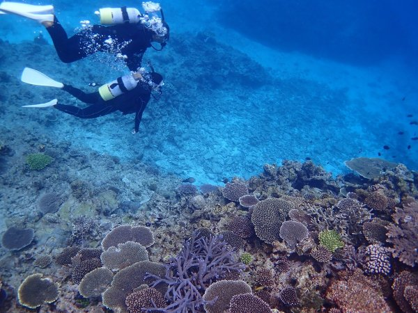 カラフルなサンゴや魚たちで賑わう伊江島の海の世界!