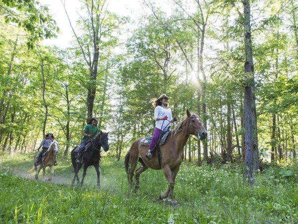 森の中で乗馬が楽しめるコースもあります。