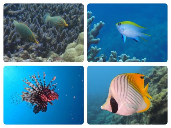 海の珍しい生き物を探しに行こう