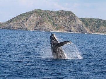 クジラ遭遇率98%以上!出会えなかったら全額返金保証あり