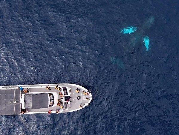 クジラにギリギリまで接近!