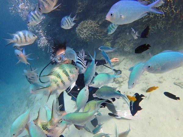 熱帯魚への餌やり体験つき