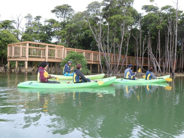 沖縄で見れる全てのマングローブが1か所で見られる