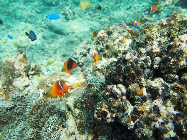 カラフルな魚たちの生活を覗き見してみよう!