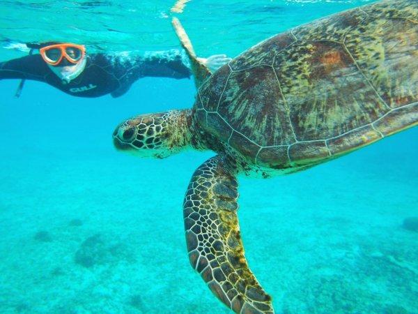 シュノーケリングでウミガメとも泳げるかも!