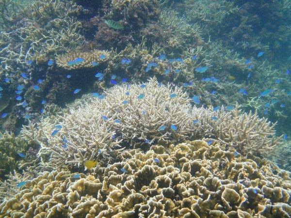 サンゴやカラフルな魚たちに会いに行こう!