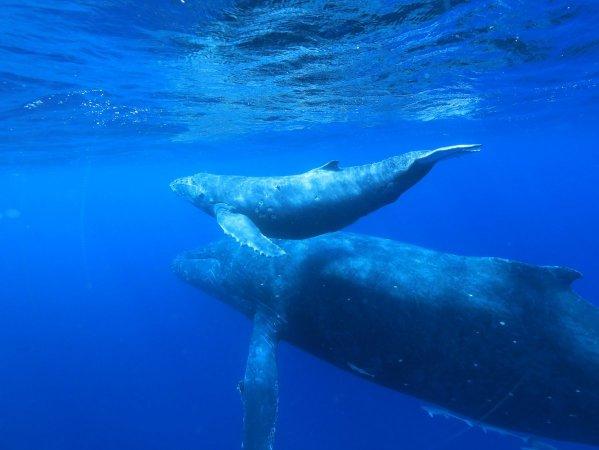 貴重な親子クジラが見られることも!