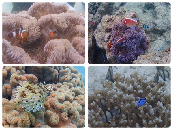 色々な海の生き物と出会えます