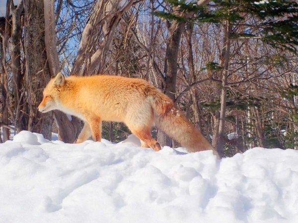 運が良ければ、野生動物と出会うことができるかもしれません!