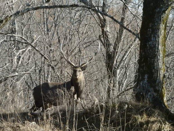 釧路湿原に暮らす野生動物との出会い