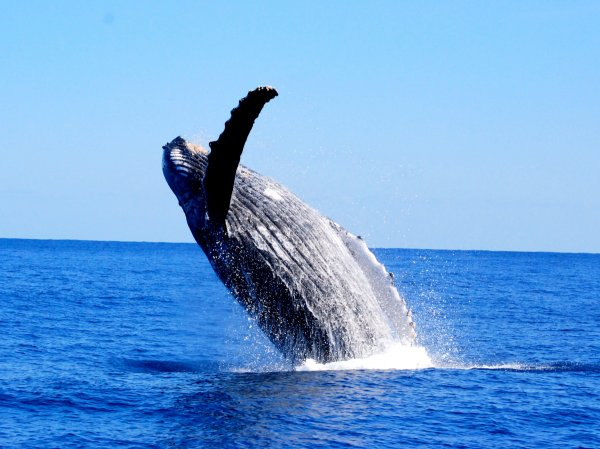 ど迫力のクジラの様子に驚くことでしょう!