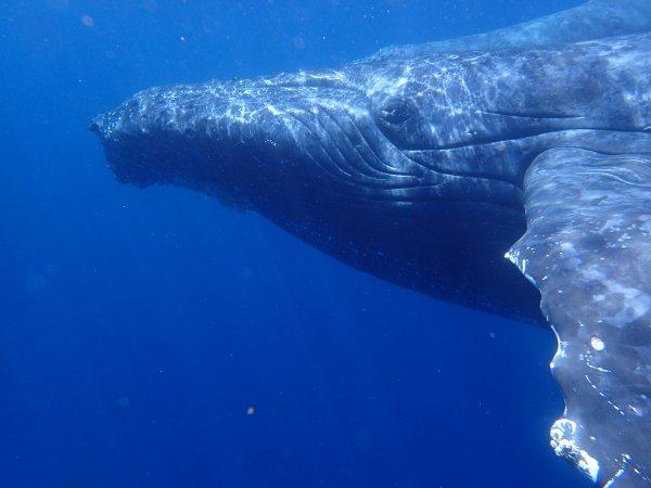 ホエールスイムでクジラに急接近!