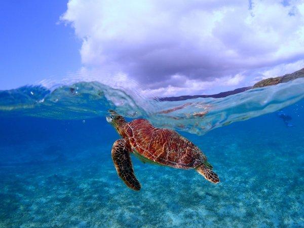 ウミガメと一緒に寄り添って泳いでみよう♪