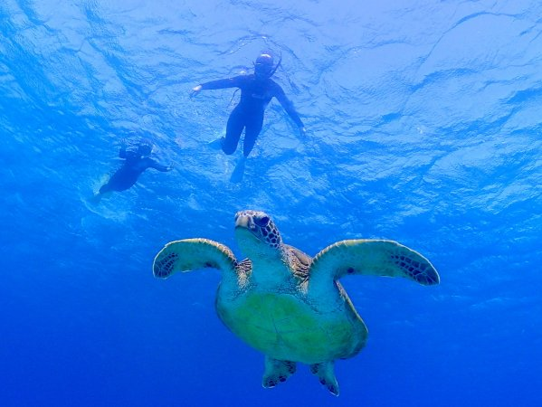 ウミガメとの遭遇率も高い!一緒に泳げる!