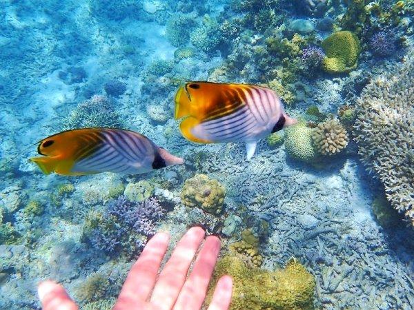ぷかぷか浮かびながらお魚さんたちが近くで観察しよう!