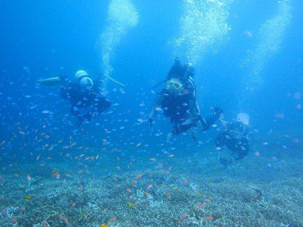 憧れの石垣島でダイビング!