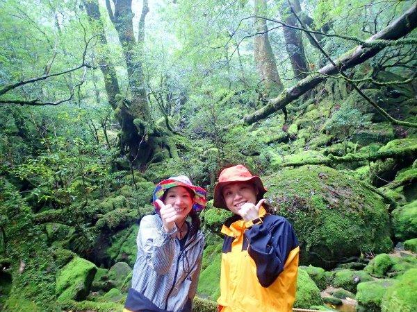 神秘的な雰囲気が漂う、苔むす森へ行ってみよう