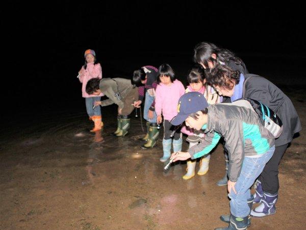 夜の石垣島を探検!不思議な生き物に会いに行こう