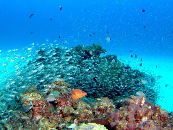 海の中にはカラフルなお魚たちがたくさん待っています!